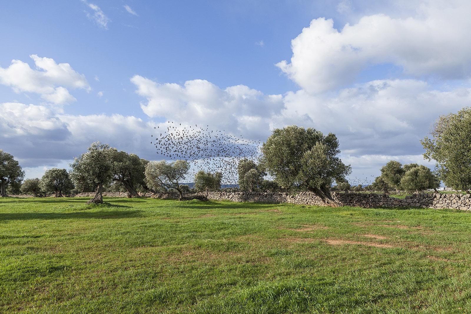 La Puglia degli ulivi e dei muretti a secco
