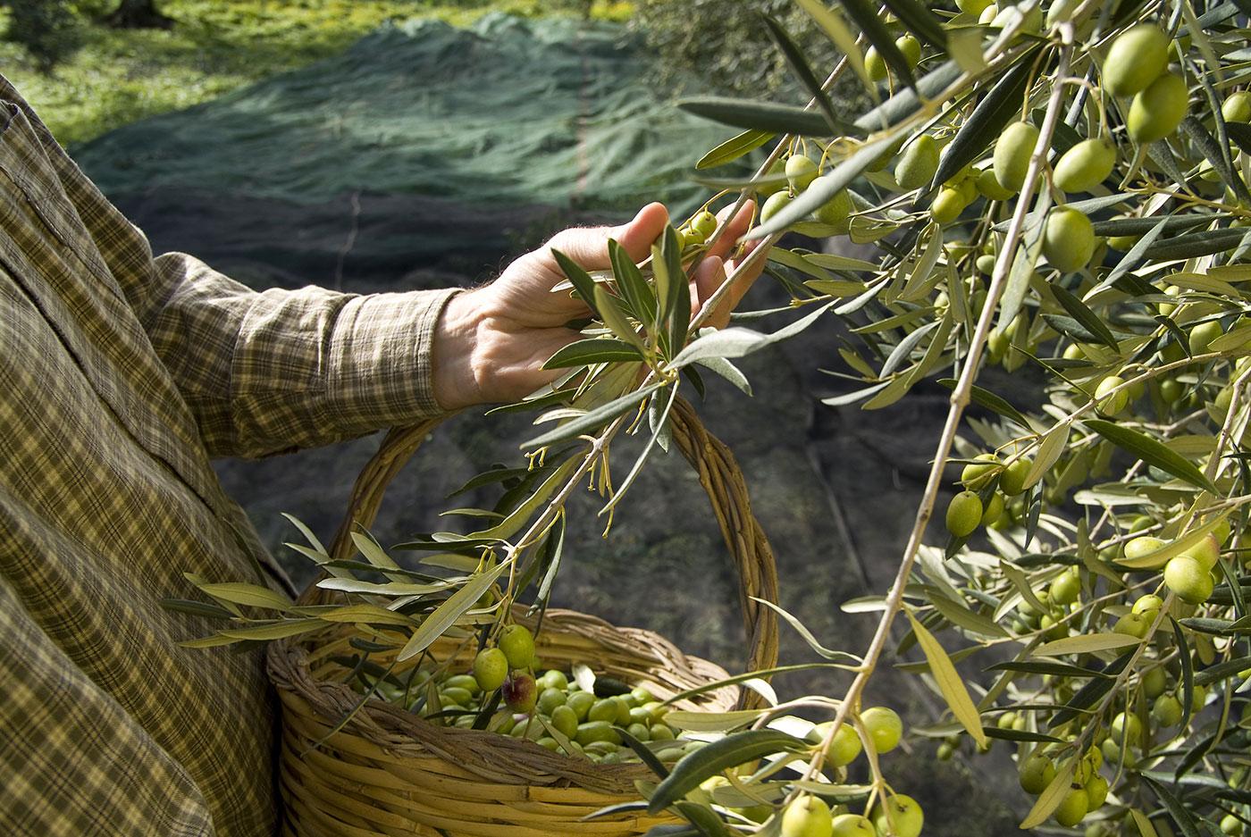 DEVO design extra vergine di oliva - i Bubboli - Ceramica artigianale e Olio Extra Vergine d'Oliva - PUGLIA
